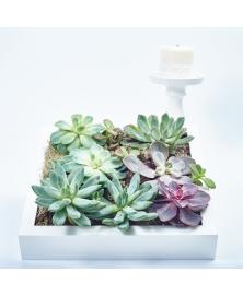 Tablou cadou plante suculente