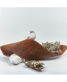 Porumbei decorativi