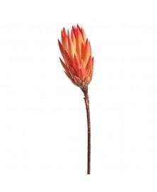 Planta Protea uscata -rosu corai