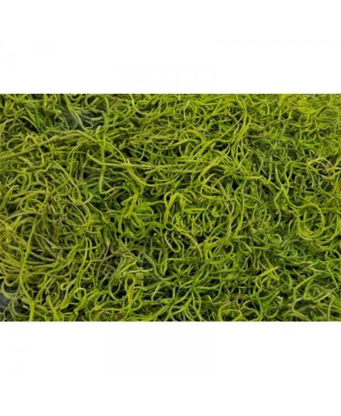Muschi Tilancia decorativ verde deschis 300