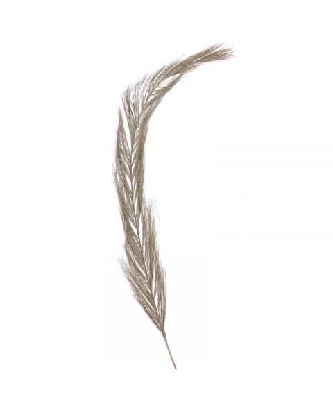 Date widdle -planta exotica uscata