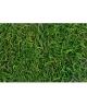 Muschi Tilancia decorativ verde 100