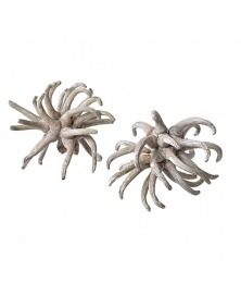 Planta uscata Spidergums -gri cu alb