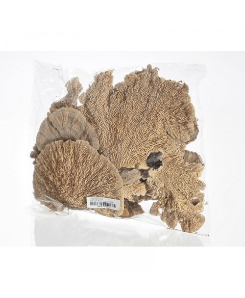 Ciuperci uscate albite decorative