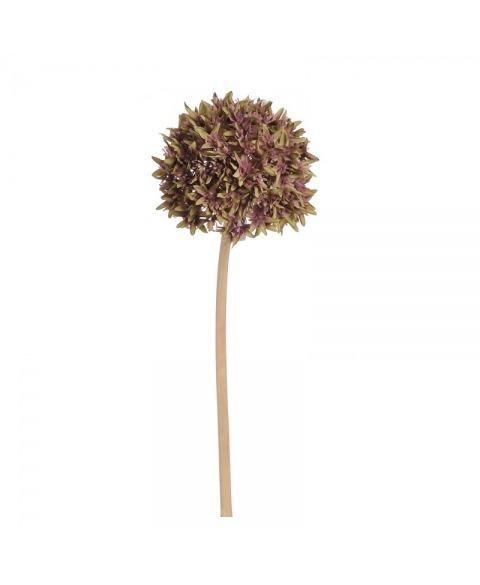 Allium artificial