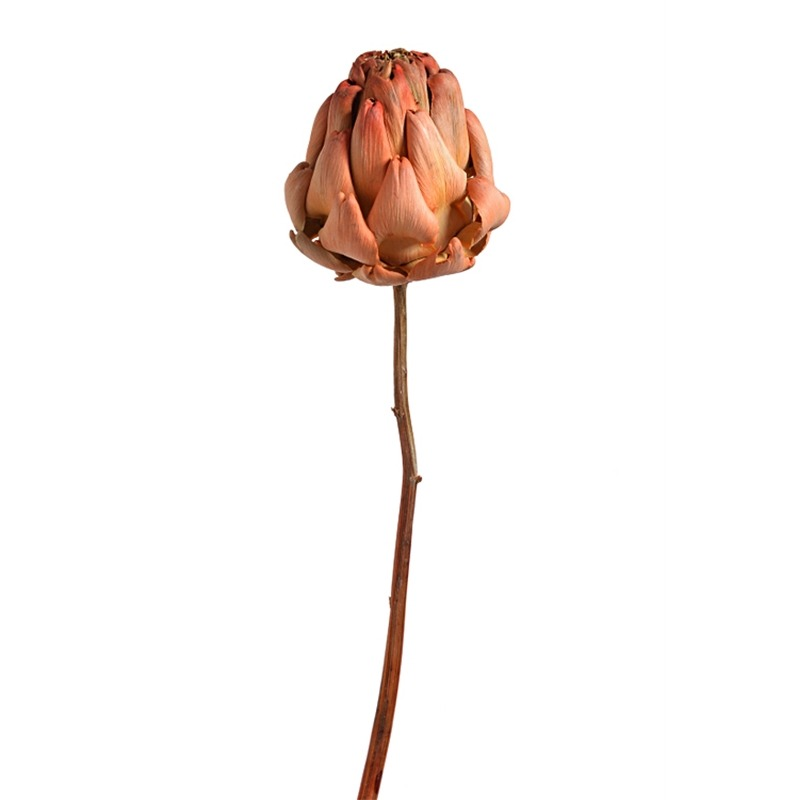 Floare de anghinare uscata portocalie