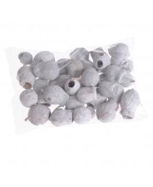 Bellgums-clopotei de eucalipt albiti