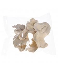 Coji albite -gura broastei
