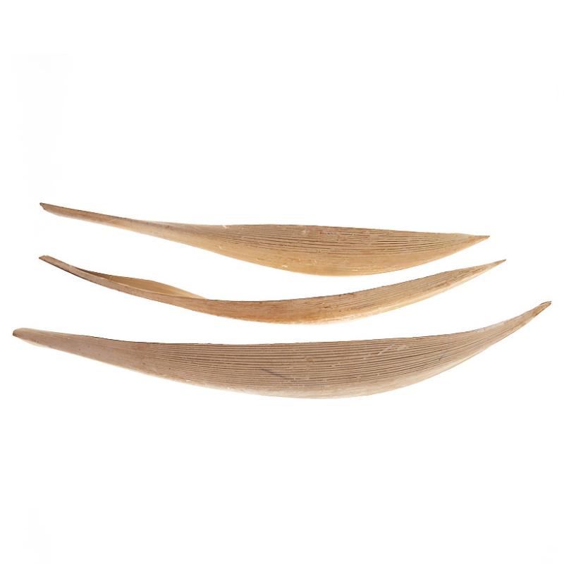 Barca frunza cocos albita