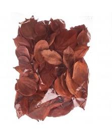Frunze catifelate ruginii