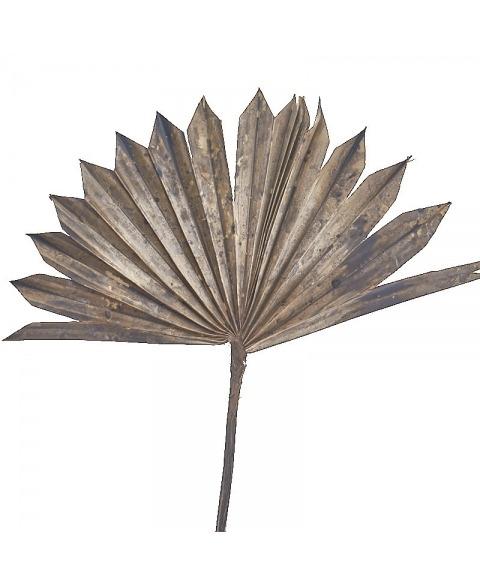 Frunze palmier antichizate