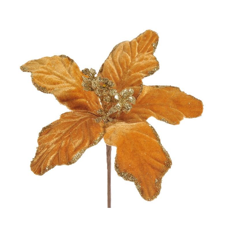 Poinsettia catifelata -aurie