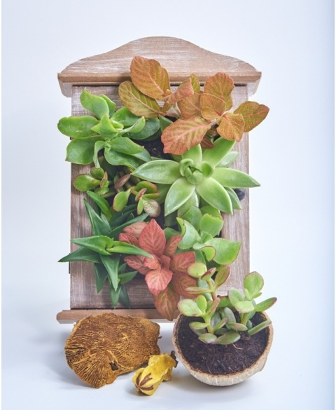 Cutie cadou plante suculente