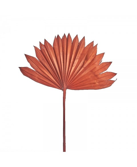 Set frunze palmier diverse culori