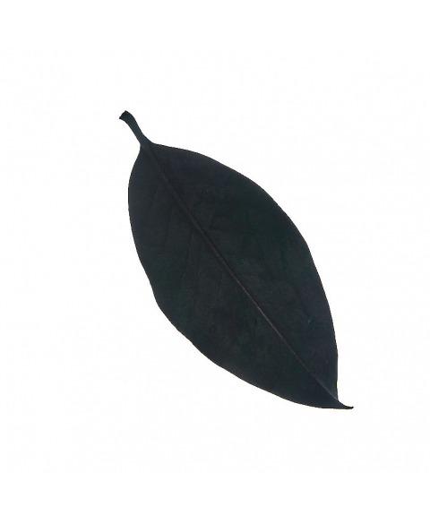 Frunze Magnolie Verzi