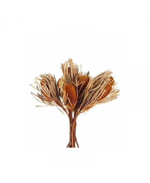Banksia culori diverse