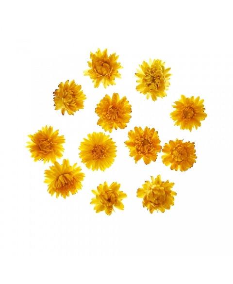 Flori uscate Helichrysum culori diverse