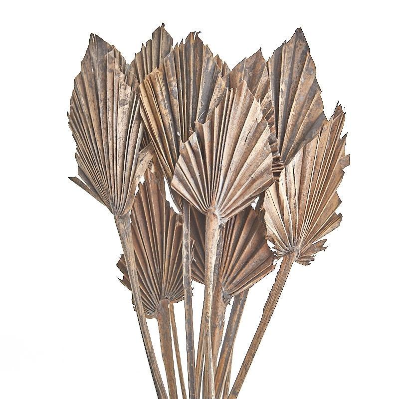 Frunza palmier uscata mini