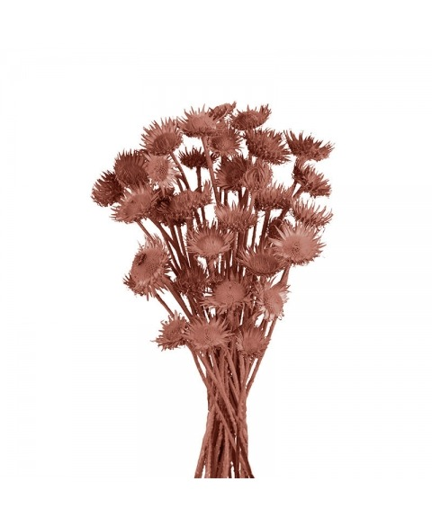 Floare de ciulin culori diverse
