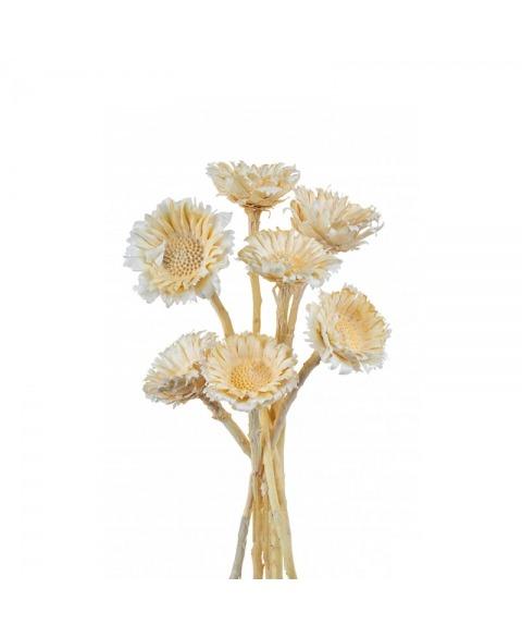 Floare Rosseta albite
