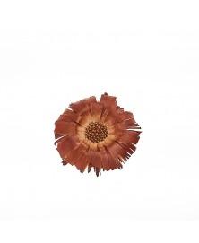Protea floare capete